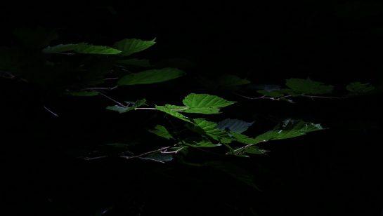 leaves-1633791_1280